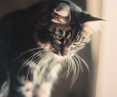 Emma passed in 2008 at 19 years old