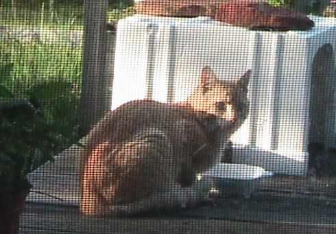 Light orange Tom cat