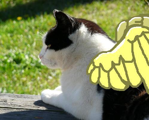 Petunia, a fine kitty