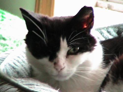 Petunia cat in her bed.
