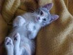 Pearl as a kitten