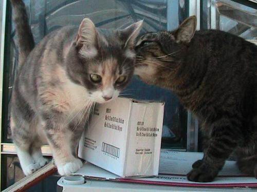 The girls can smell that the mail is for them.