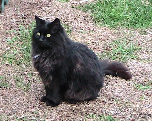 new b cat 1