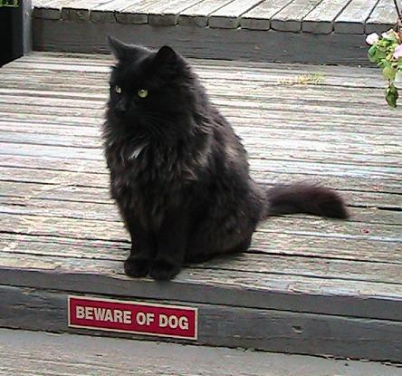 new b cat 2